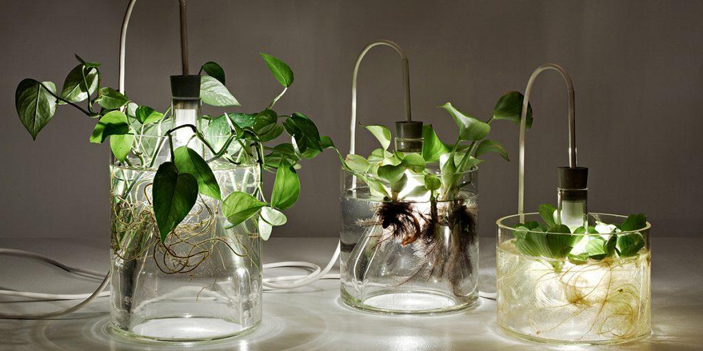 piante e luce