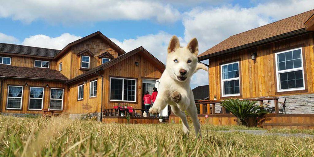 cane che corre nel prato di casa