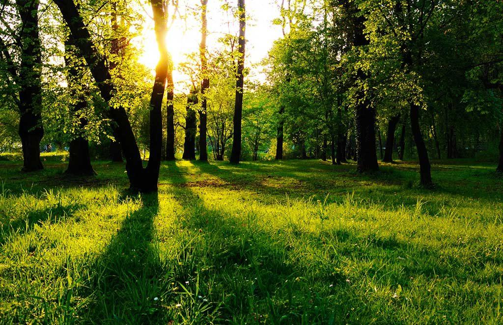 bosco con prato verde