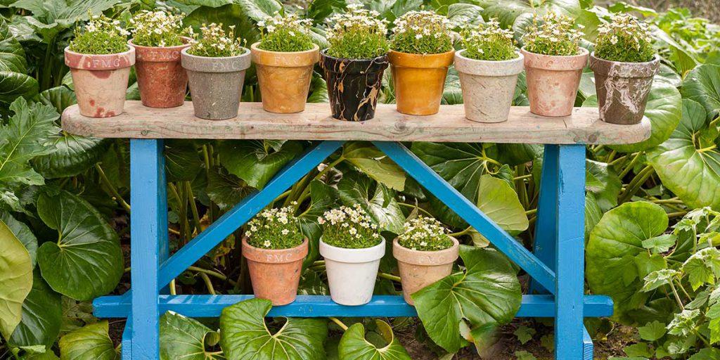 orticola giardinaggio