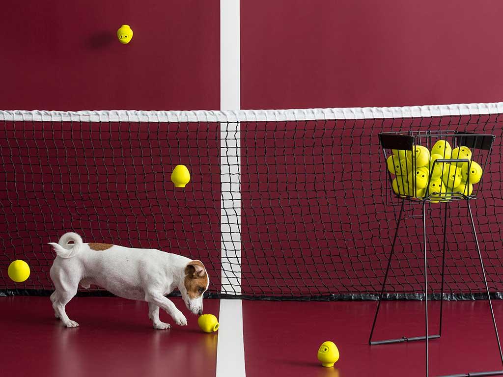 gioco per cane