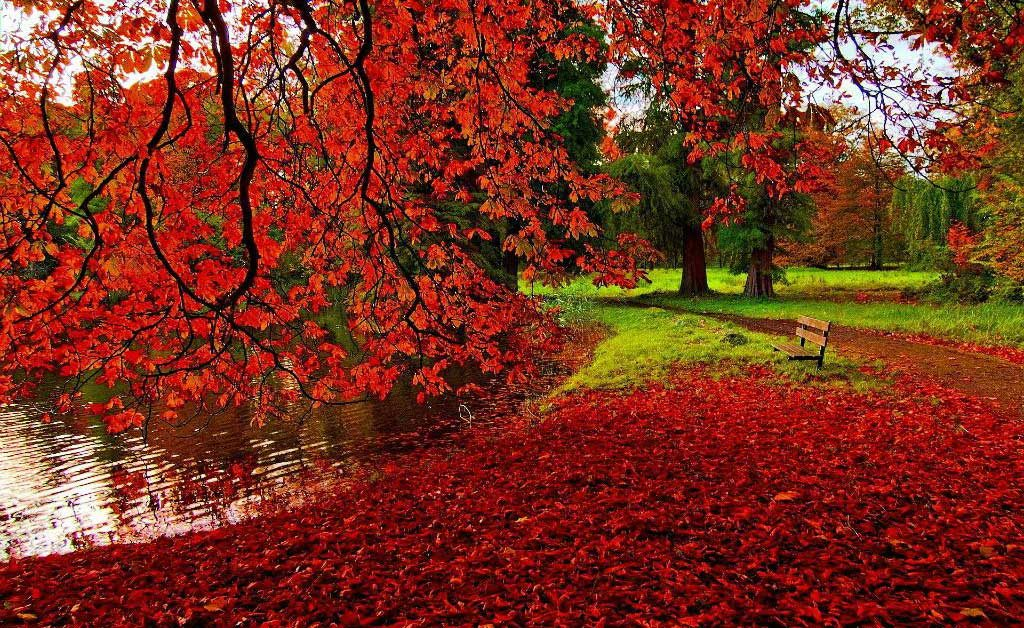 giardino autunno foglie rosse