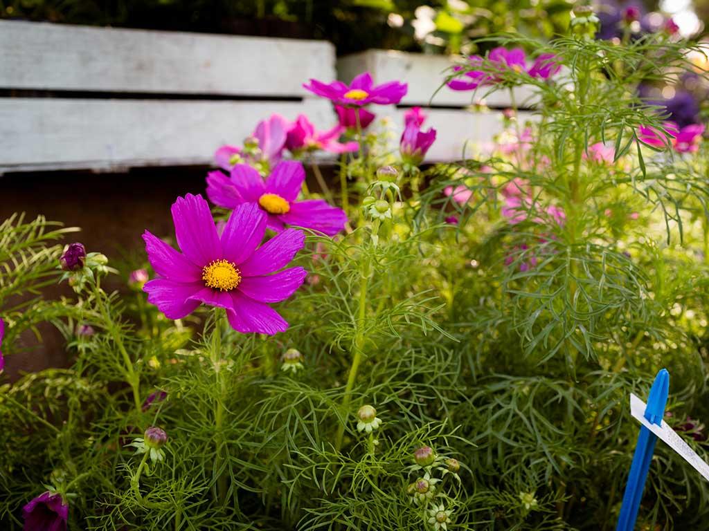 Giardini d 39 autore tante idee per un giardino d 39 inverno for Giardino fiori