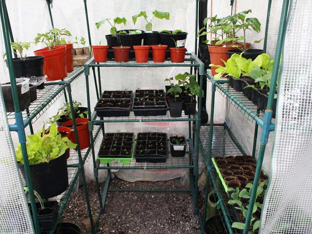 serra piante balcone