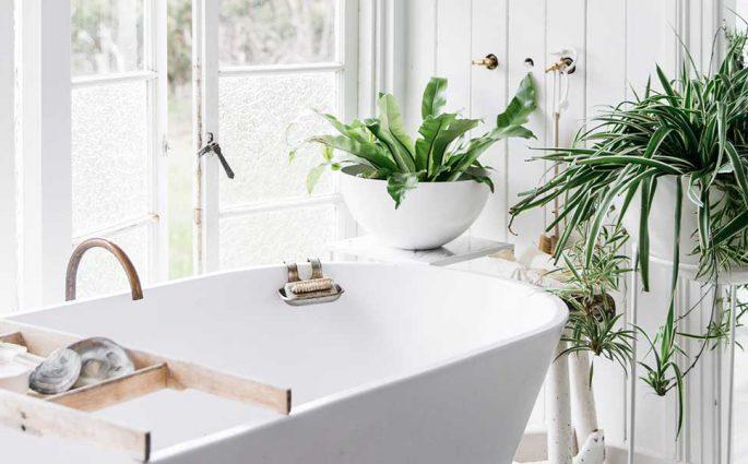 piante in casa ambienti