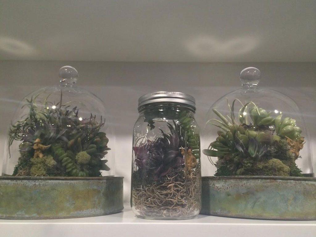 piante in barattolo mini giardino