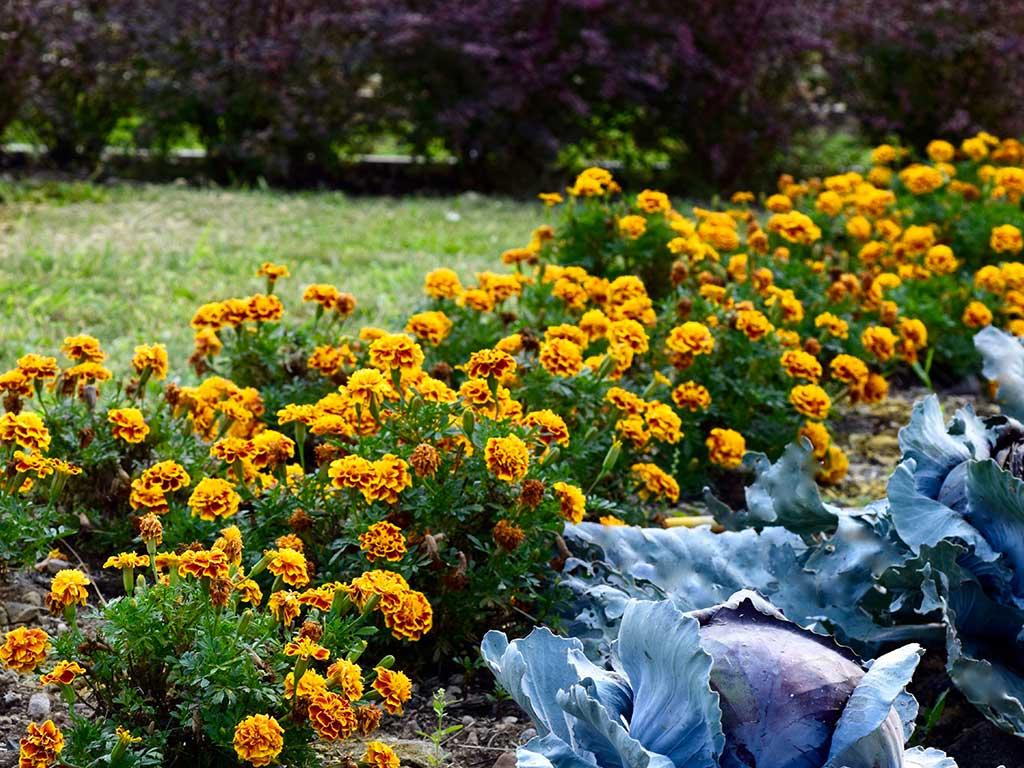 piante e fiori orticola