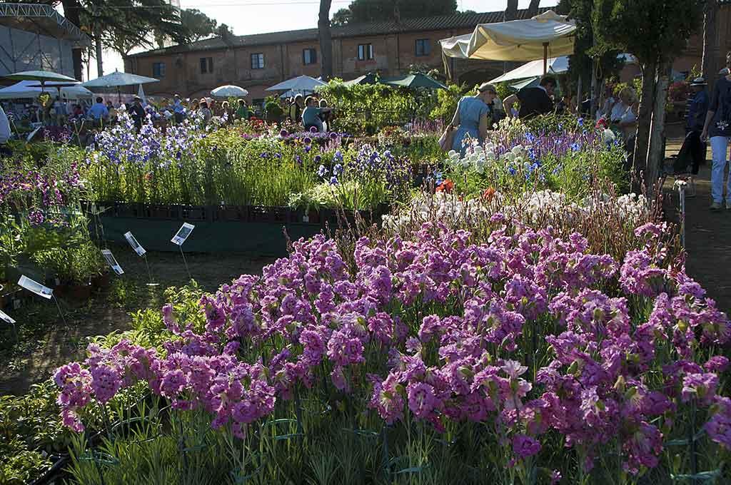 piante casa giardino