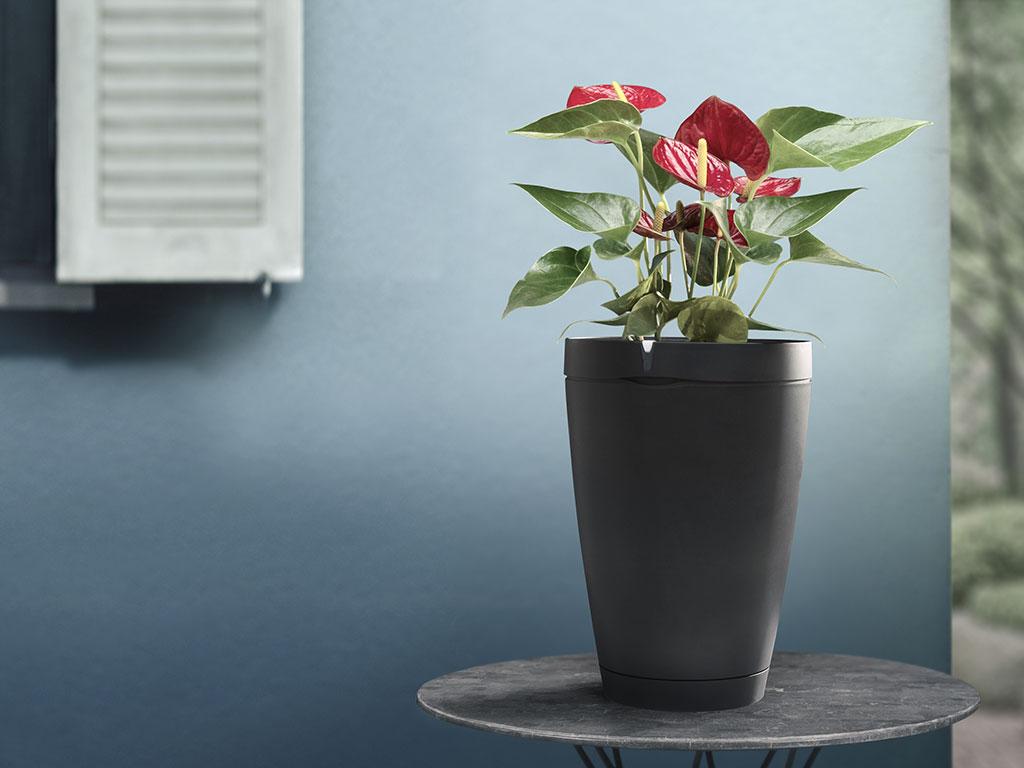 piante e fiori irrigazione casa