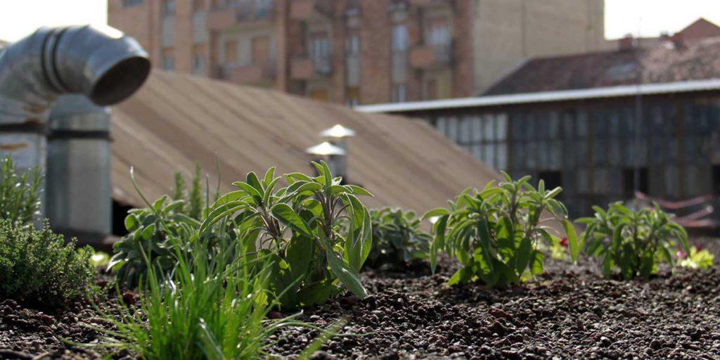 vista orto in vaso sul tetto del condominio