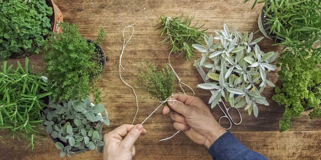 piante aromatiche per la cucina