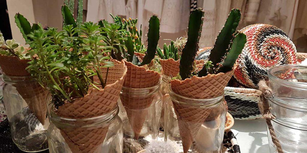piante grasse piantate in coni gelato