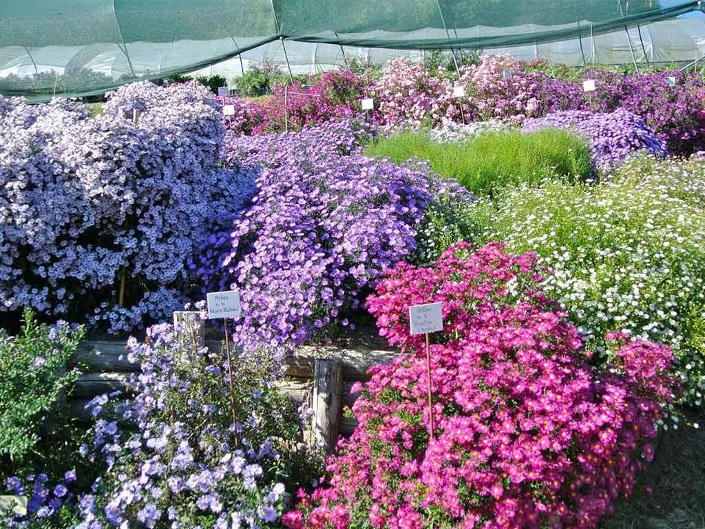 piante e fiori colorati in esposizione