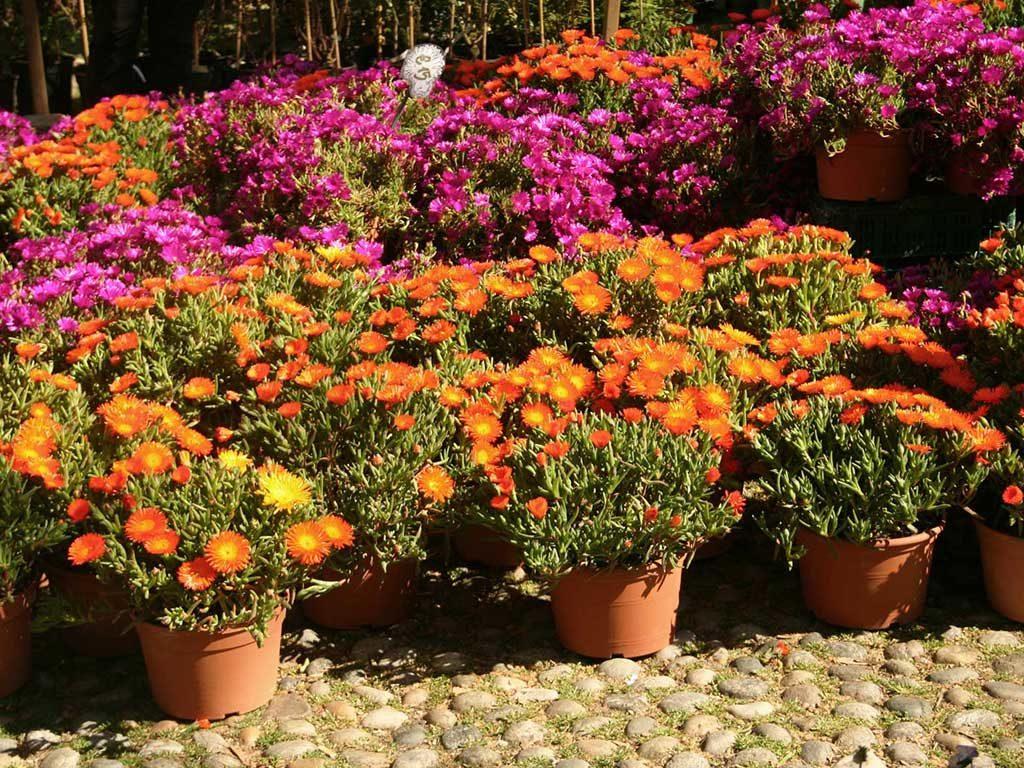 vasi fiori in vendita