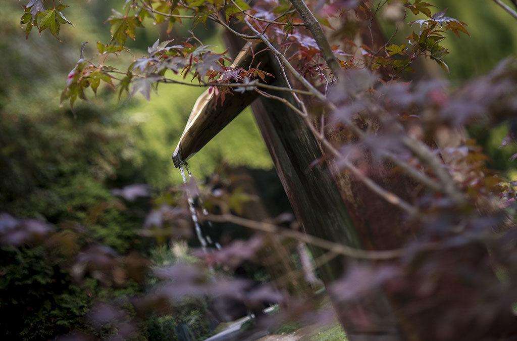 vista giardino con fontana legno