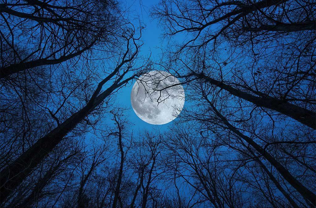luna piena vista bosco notte
