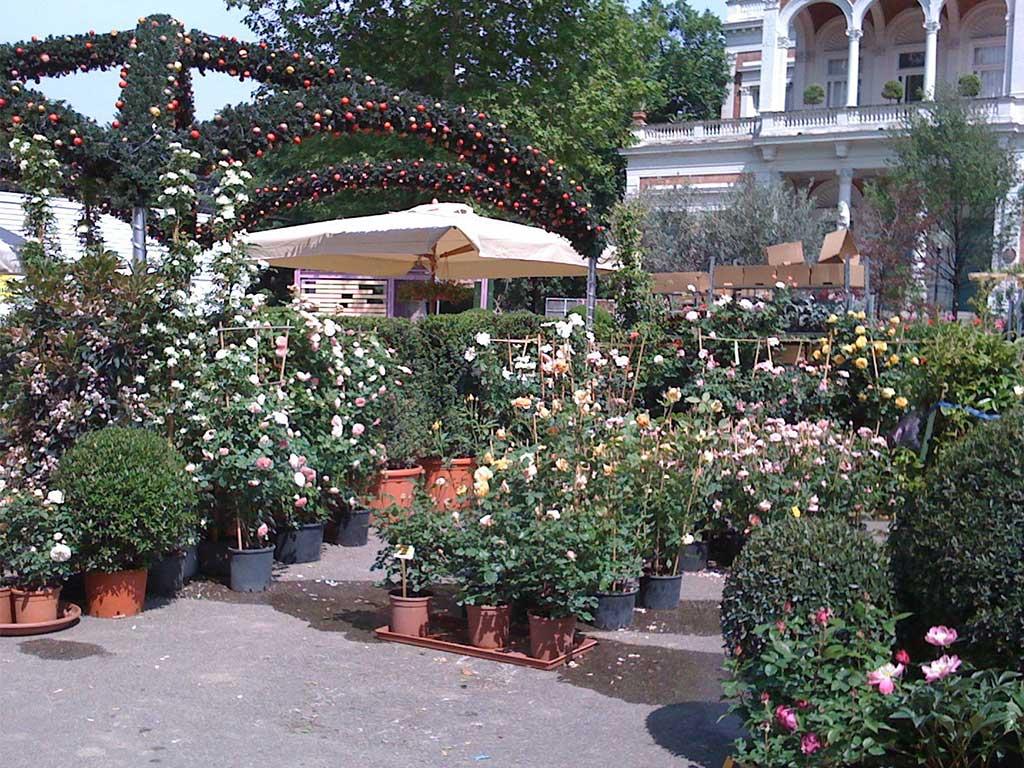mercatino piante e fiori esposizione
