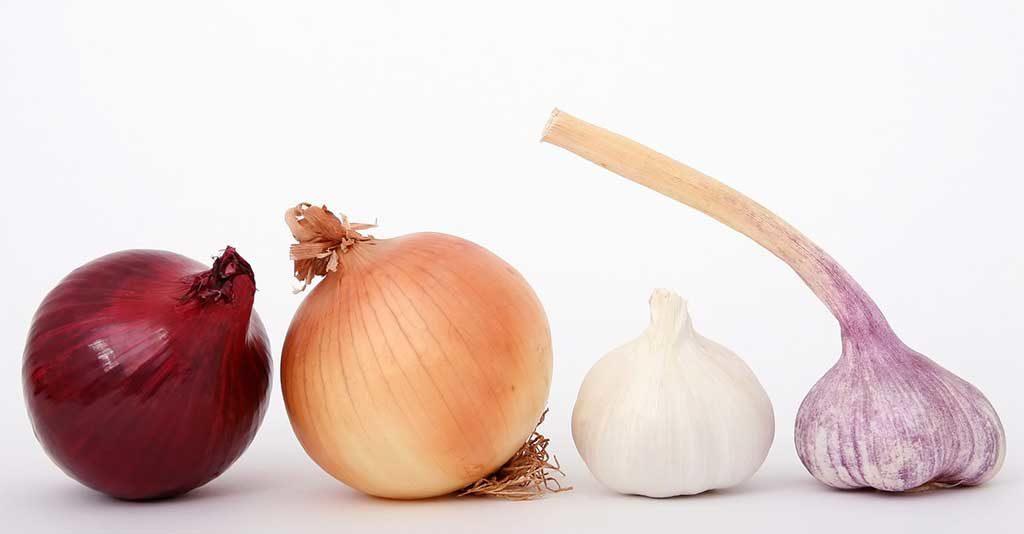 aglio e cipolla varietà