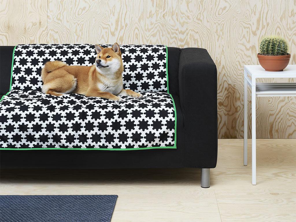 cane divano plaid
