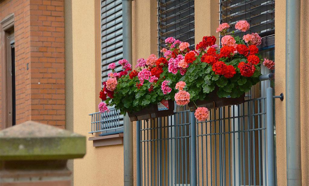 ringhiera balcone vasi fiori