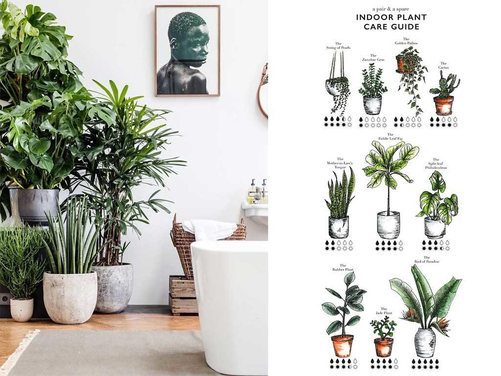 schema grafico piante interno