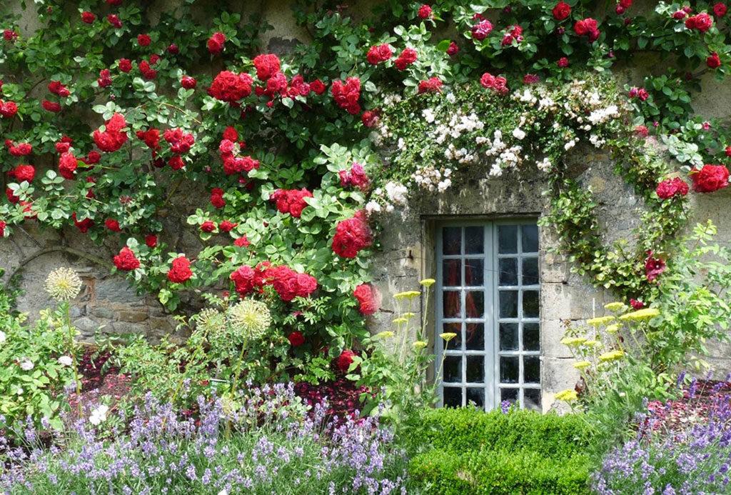 rose rosse rampicanti facciata