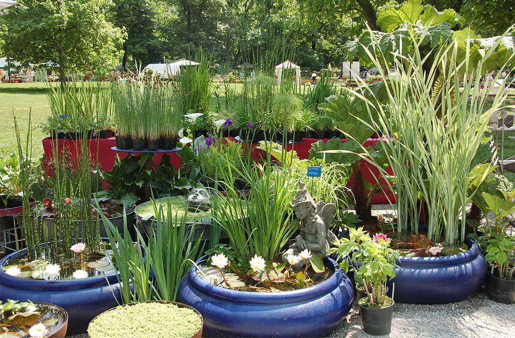 vasi piante tonde