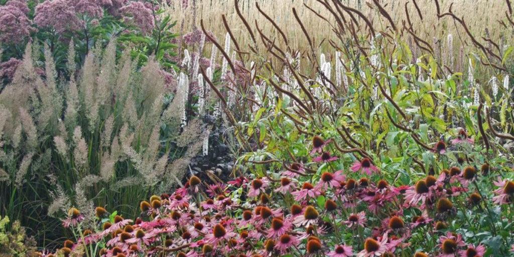 piante e fiori colorati