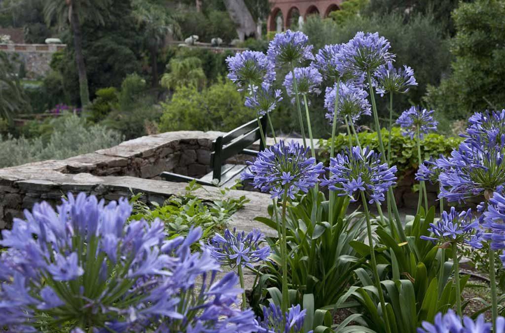 fiori villa della pergola