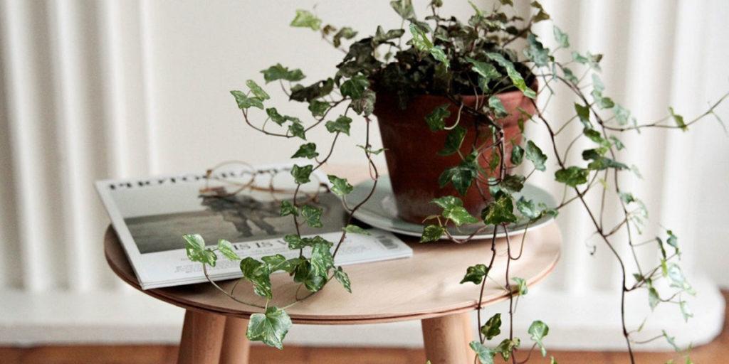 vaso pianta verde appartamento
