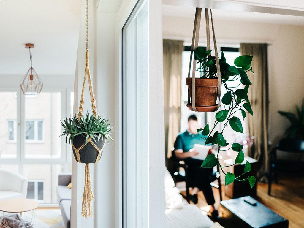 vasi piante sospesi soffitto