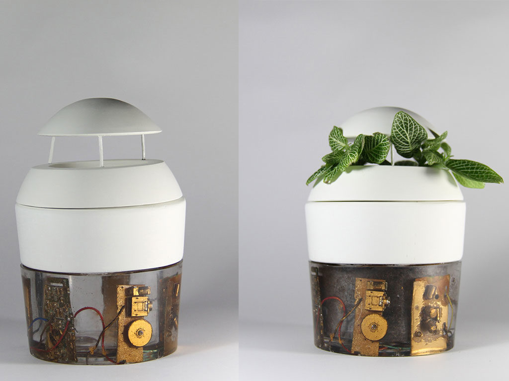 vasi piante gesso e resina
