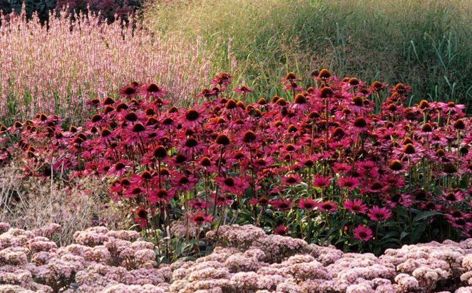 fiori e piante campo aperto