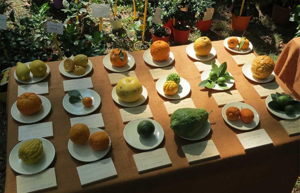 agrumi su tavolo