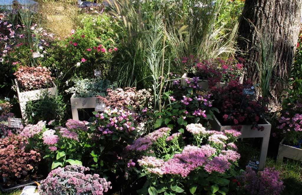 piante e fiori murabilia