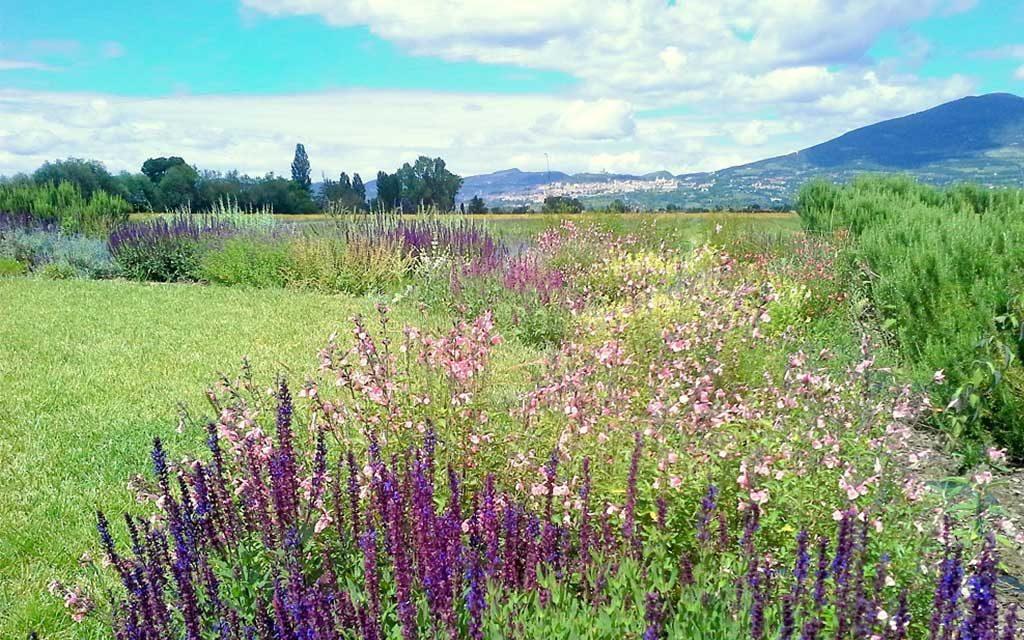 fiori campo erba verde alberi