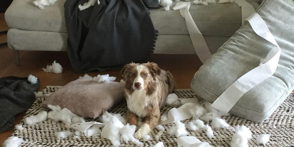 cane danni casa divano tappeto