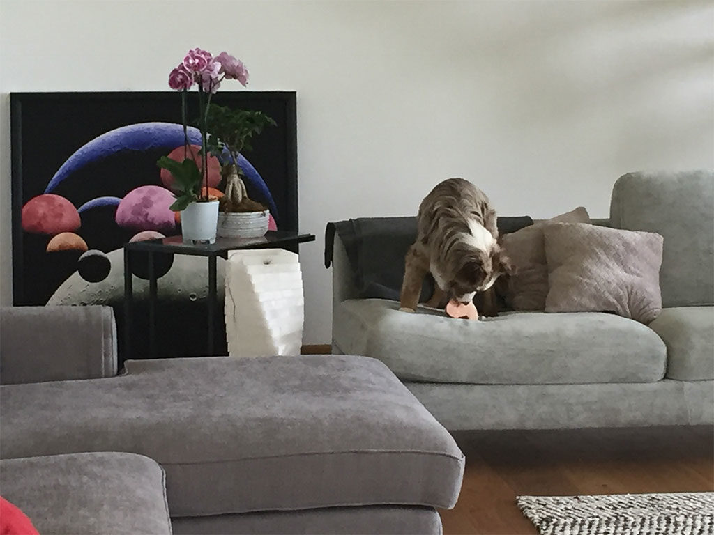 cane sgranocchia divano