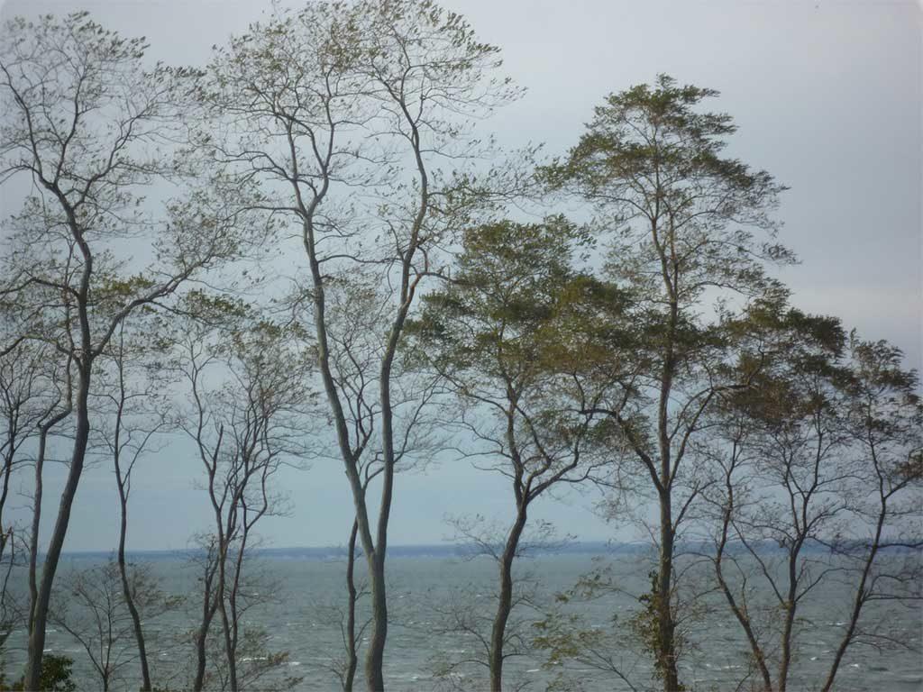 chiome alberi giardino mare