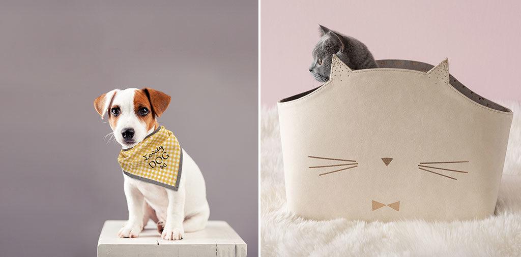 trasportino gatto e foulard cane