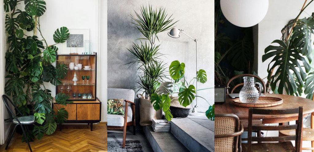 tipi piante appartamento