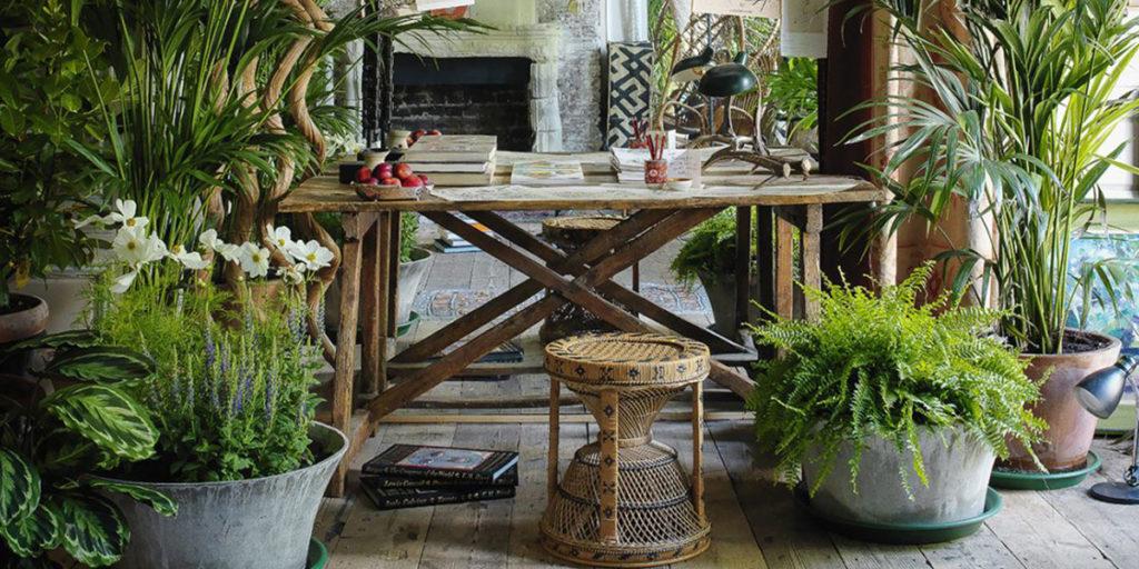 piante in casa inquinamento