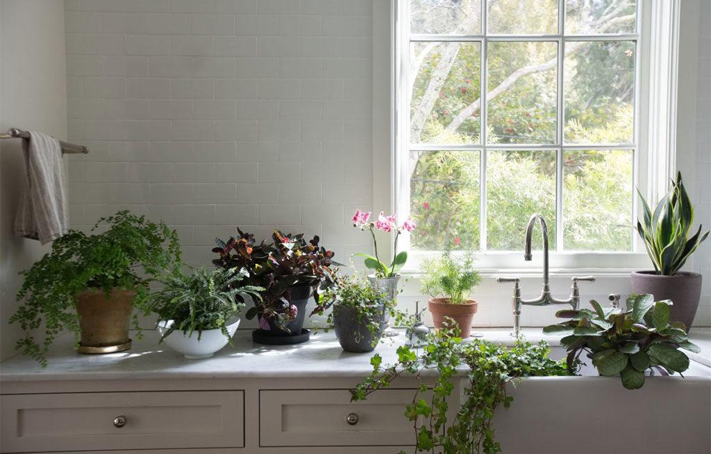 Le piante antinquinamento in casa | La casa in ordine