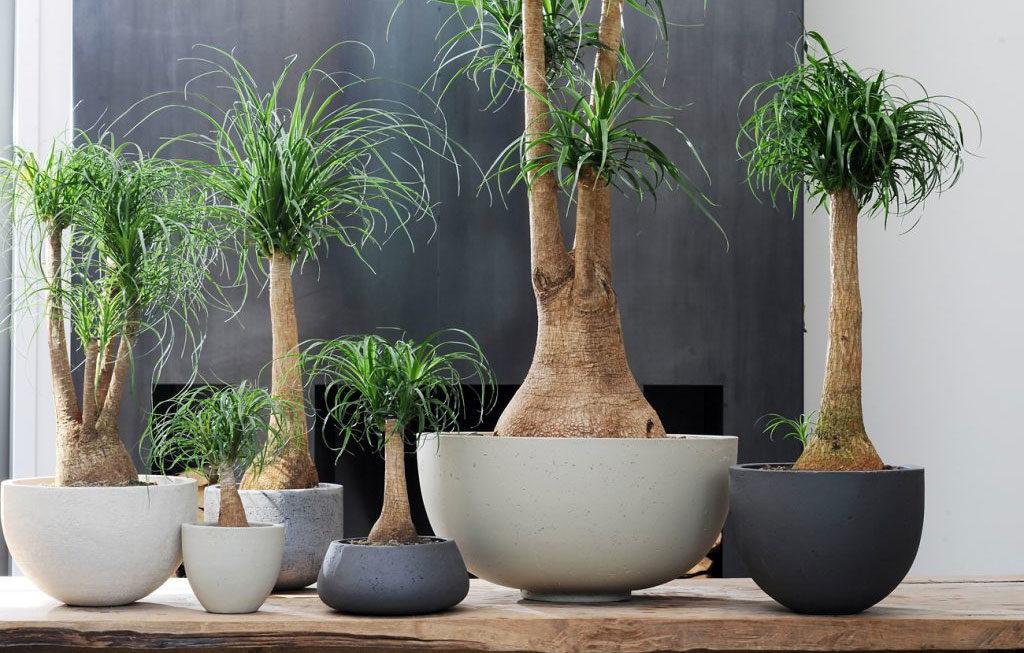 piante verdi in vaso