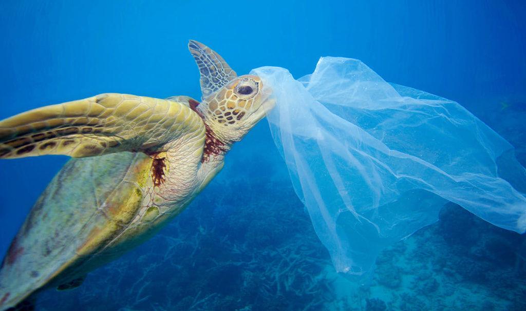 tartaruga marina sacchetto plastica