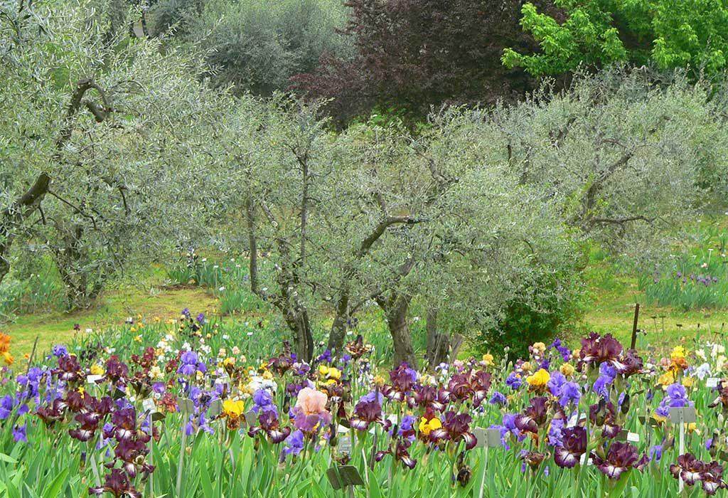 fioritura primavera fiori