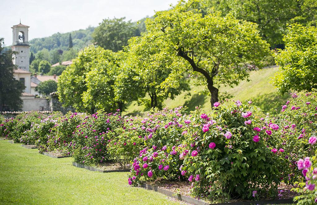 giardino fiorito rose