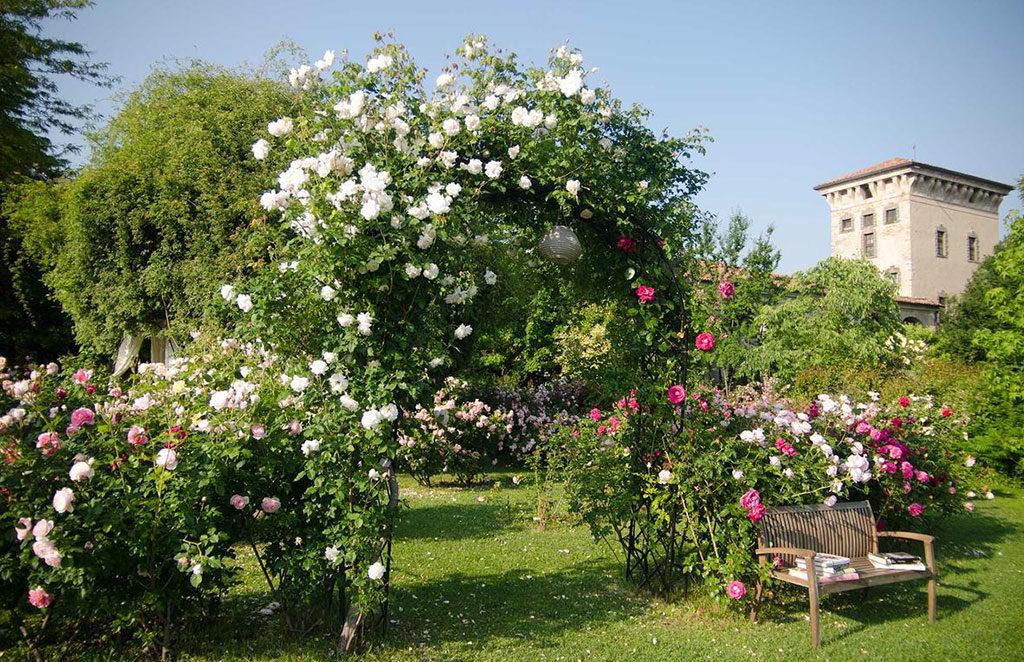 rose in fiore brescia giardino