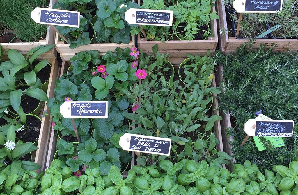 fiera verde erba aromatiche