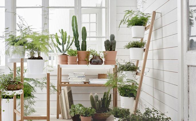 ikea green festival piante casa